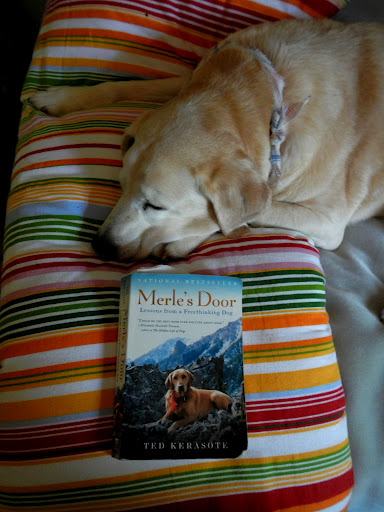 Bogie is particularly enthralled with the book.  sc 1 st  Tales From A Wandering Albatross & Merleu0027s Door: Lessons from a Freethinking Dog | Tales From A ... pezcame.com