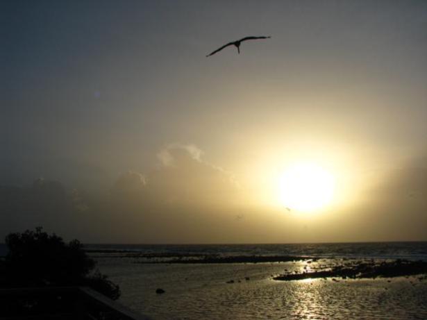 Frigatebird in Belize