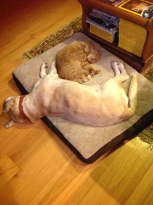 Jasper and Bogie on dog bed