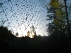 Close-up of a mist net. Note the small mesh size.
