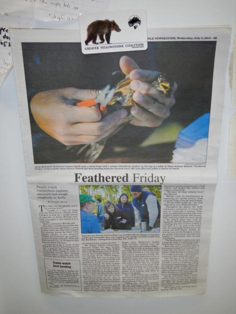 Feathered Friday article_464x618