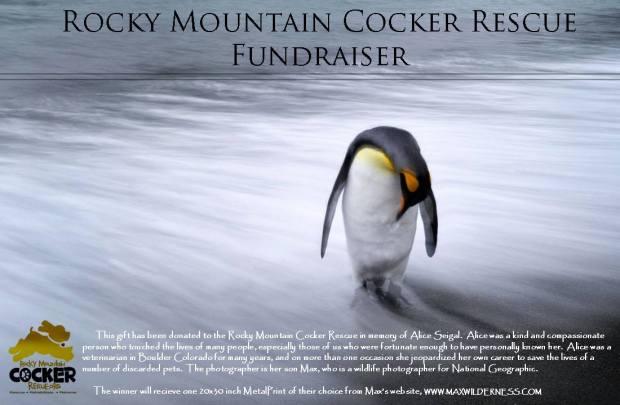 Rocky Mountain Cocker Rescue Fundraiser