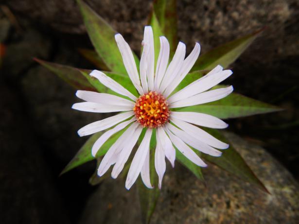 flower 2_615x461