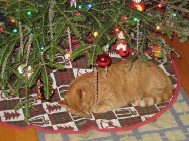 jasper under the christmas tree