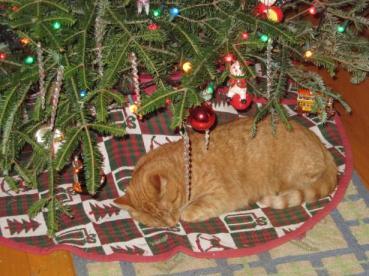 jasper under the christmas tree