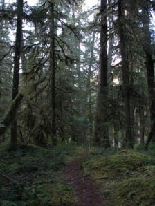 H.J. Andrews Experimental Forest Oregon