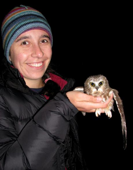 presque isle state park owl banding