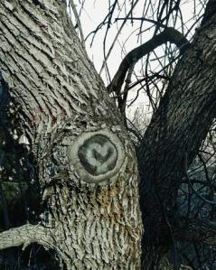 Boulder Colorado heart tree