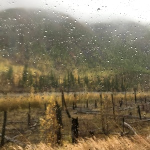 view through a rainy window of pines, larches, and trees that had been burned in a forest fire.
